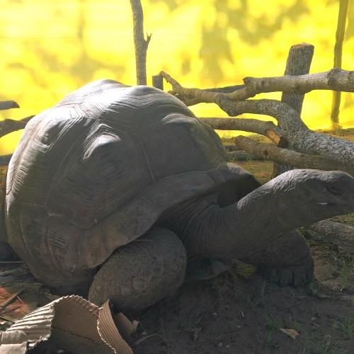 Dar es Salaam Zoo